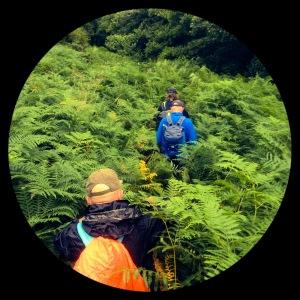 high fern