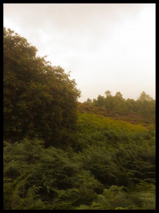 Rothbury 7