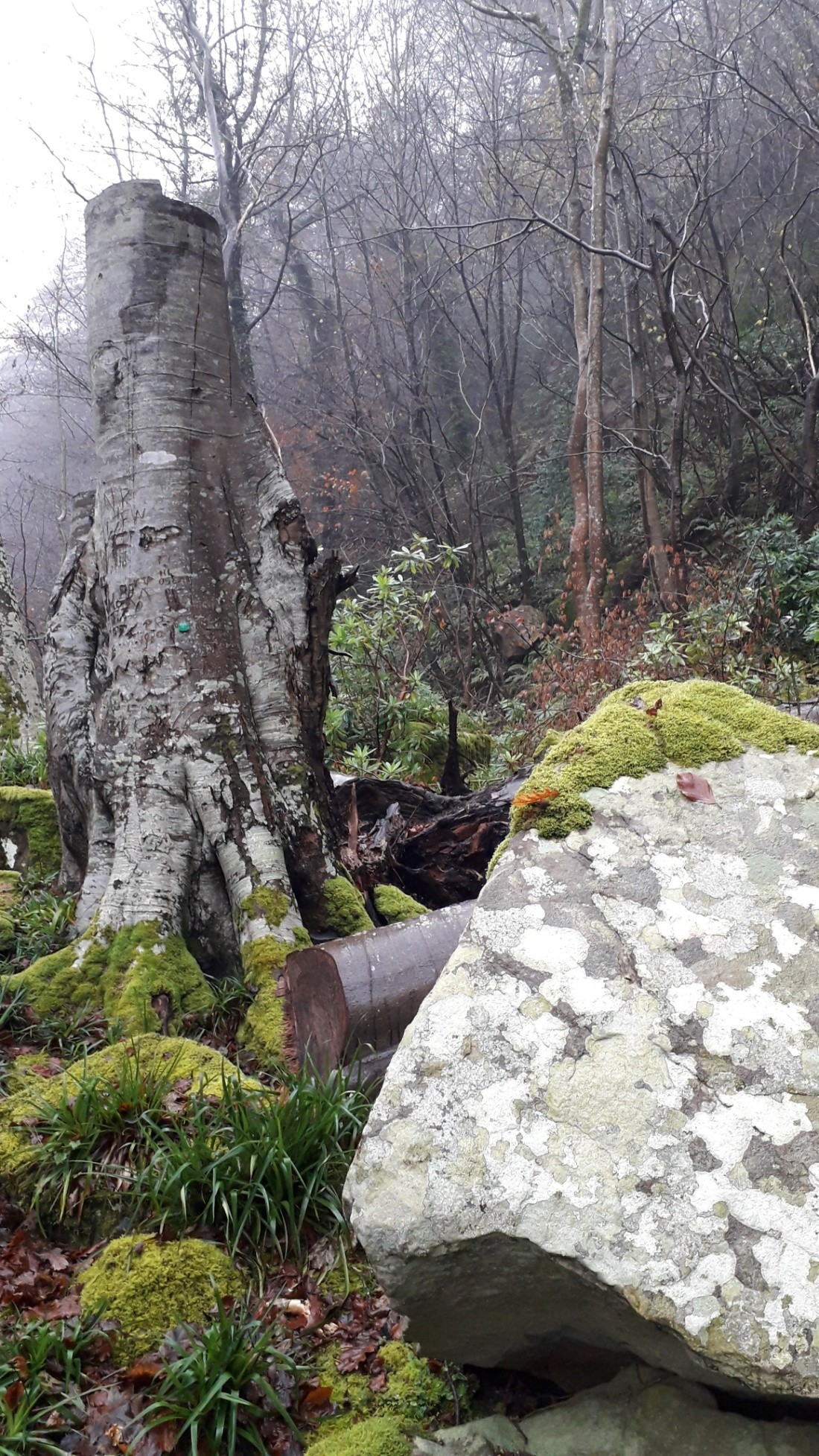 rock and wood allenbanks